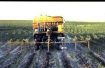 Inyeccion cultivos en lineas